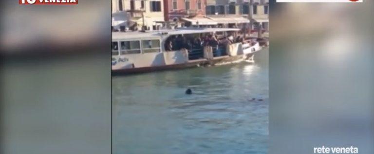 """Su Huffington Post: """"La solidarietà di Rigopiano si spegne nella Laguna di Venezia"""""""