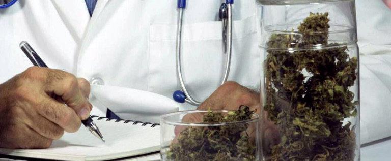 La legge per l'uso terapeutico della cannabis tutela il diritto alla salute e alla libera scelta